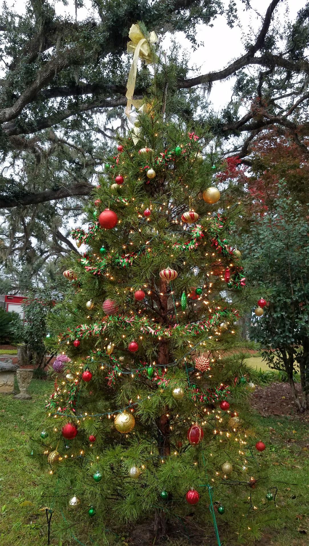 Library lights tree