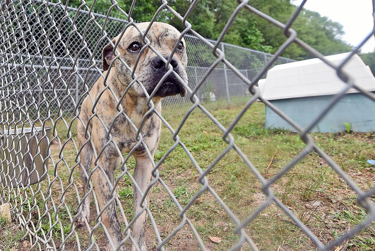 Local animal rescue groups see spike in adoptions