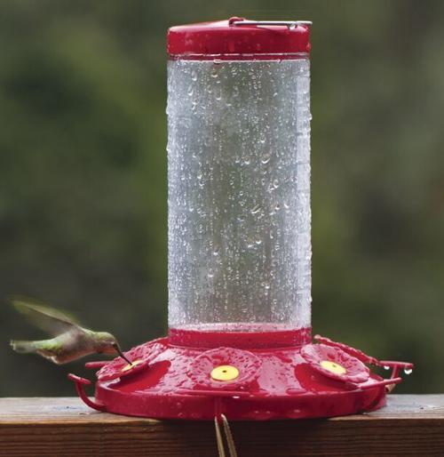 072121-ent-hummingbirds-p1