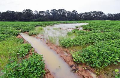 Hurricane Sally brings concern for Wiregrass farmers