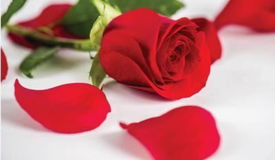 dot generic rose
