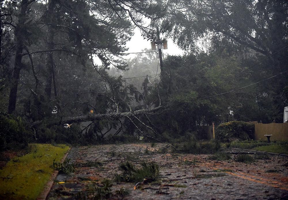 Hurricane Michael Wiregrass Magnolia