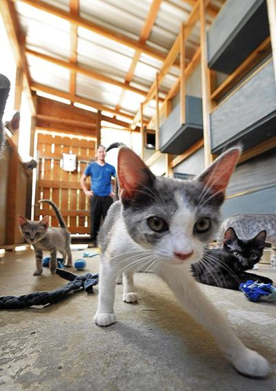 Wiregrass Humane Society accepts kittens after tragedy