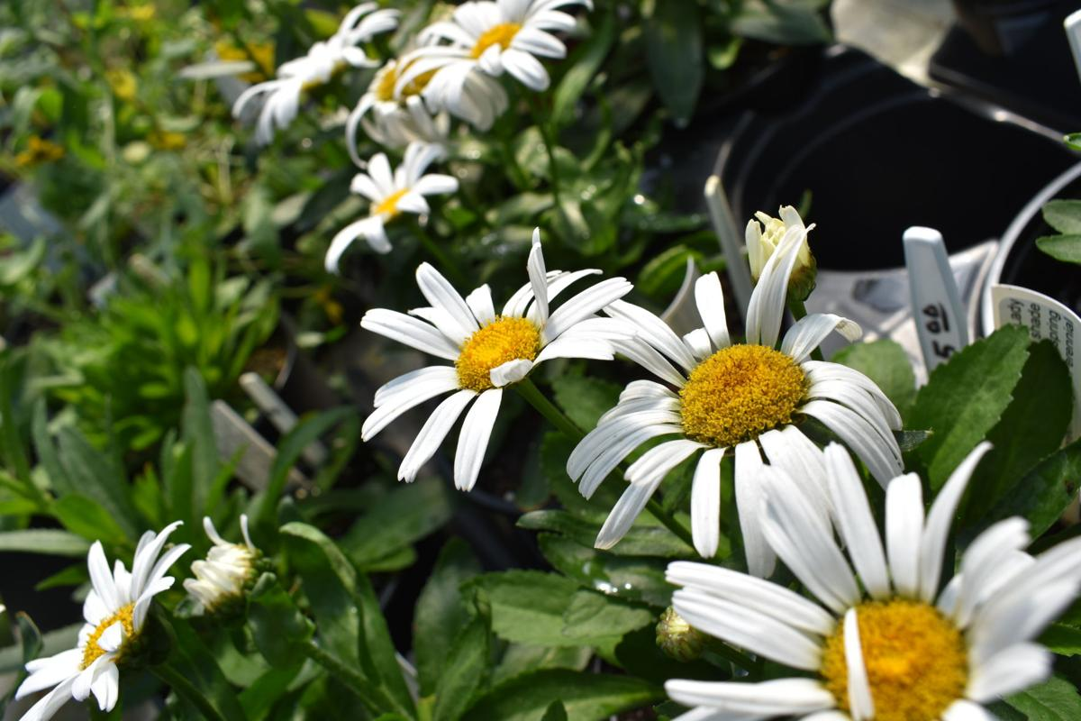 Wiregrass Master Gardeners Host Spring Plant Sale Local