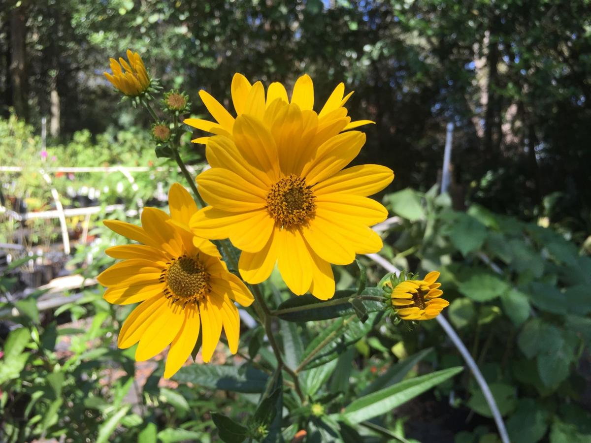 Wiregrass Master Gardeners 2016 Fall Plant Sale Featured