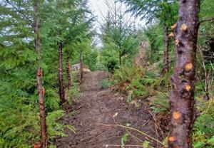 Adam's Forestry Mulching | Trails