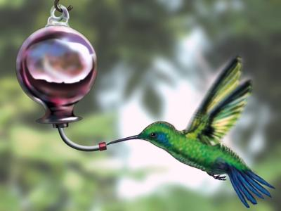 Answer Man: How can I attract hummingbirds to a feeder?