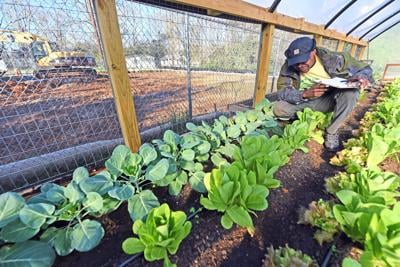 Workers removing polluted soil from Dothan lot so urban garden can grow