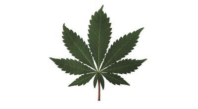marijuana/hemp generic