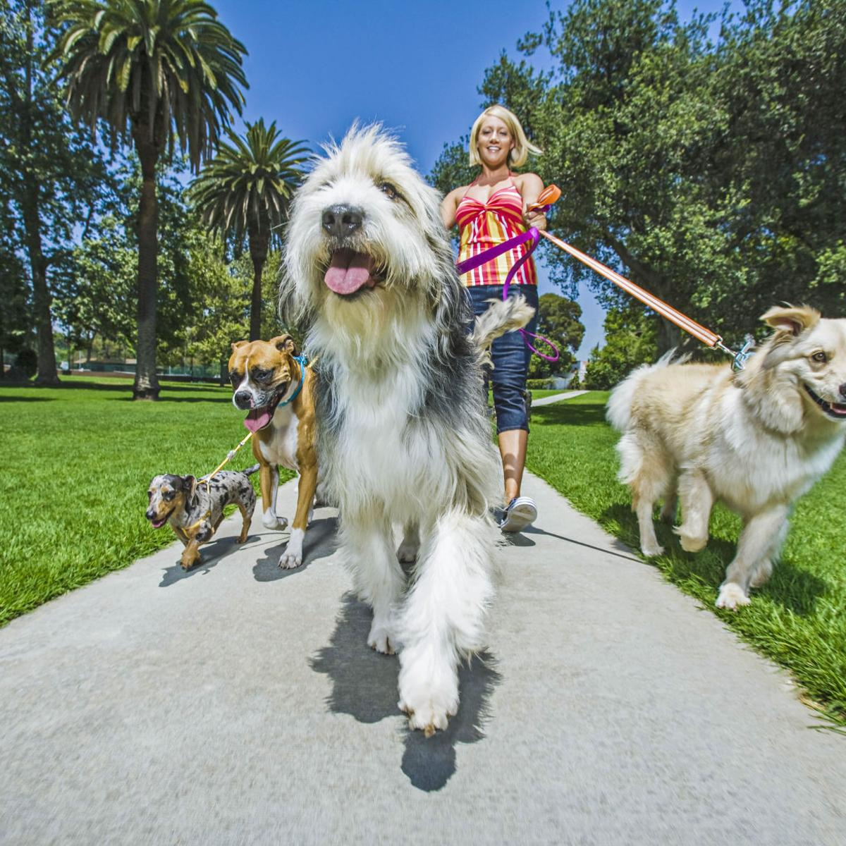 Answer Man: Can you sue if a neighbor's dog poops in your