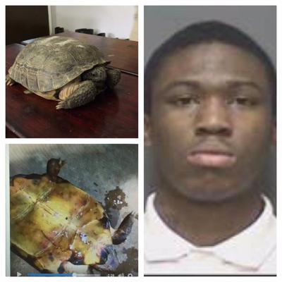 Turtle set on fire
