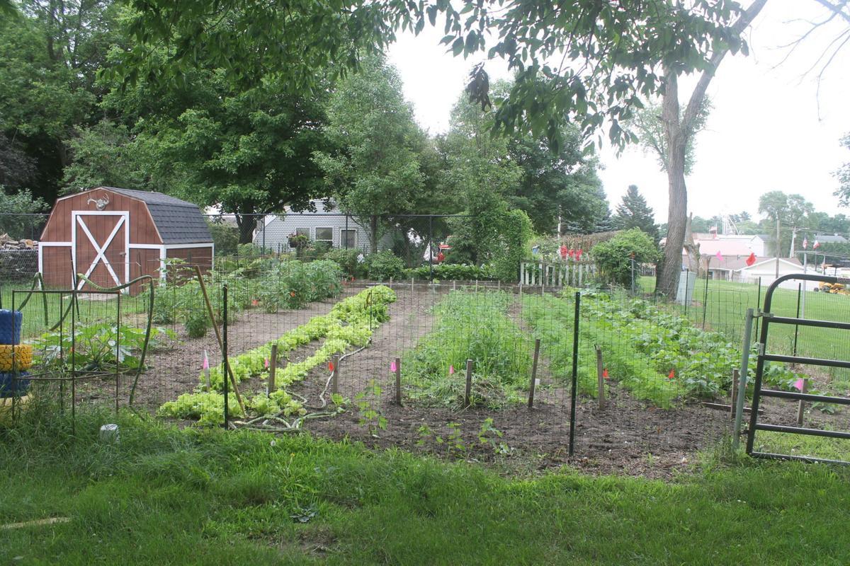 dcx-07222020-nws-garden-IMG_1478.JPG