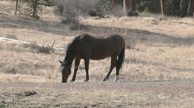 Malheur wild horses