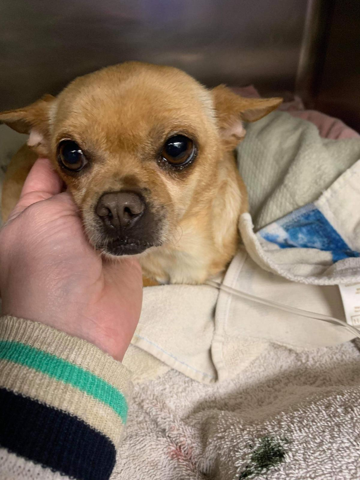 Accident turns into happy ending for dog in Hermiston