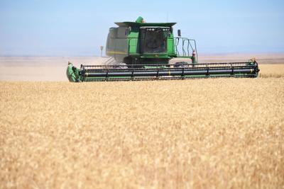 Oregon wheat harvest