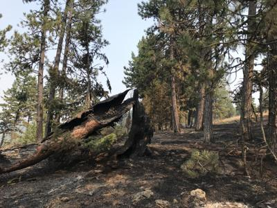 Birch Creek Fire at 50% containment