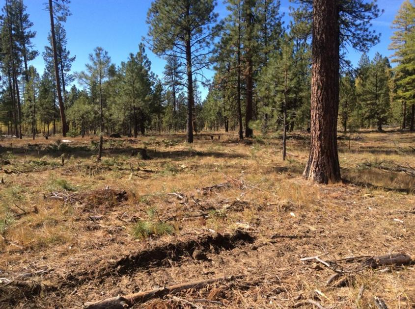 Forest management is one tool for combatting climate change in Eastern Oregon