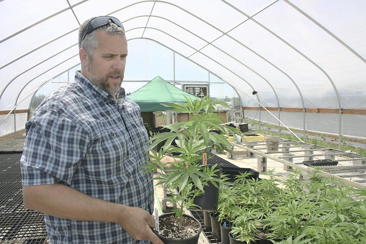 A new hope for hemp | Local News | eastoregonian com