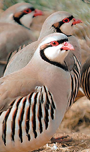 Upland game bird and waterfowl hunting outlook