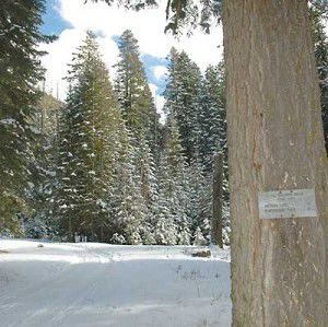 Avalanche buries skiers