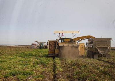 Three Mile Canyon Farms