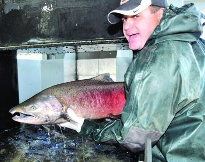 Fish count dips this year