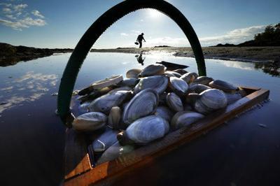 Warming hurting shellfish, aiding predators, ruining habitat