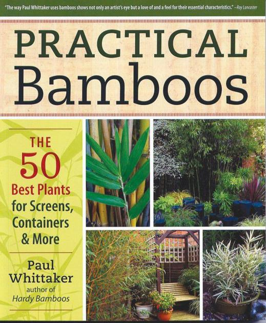 Bamboo Is More Useful Than You May Think Local News