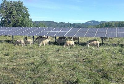 Solar panels on farmland