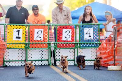 PENDLETON Dashing dachshunds needed for 10th annual Wiener Dog Race