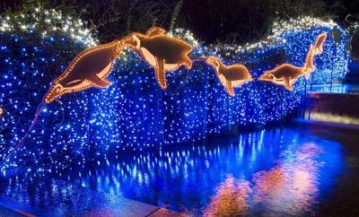 Oregon Zoo lights up for holidays