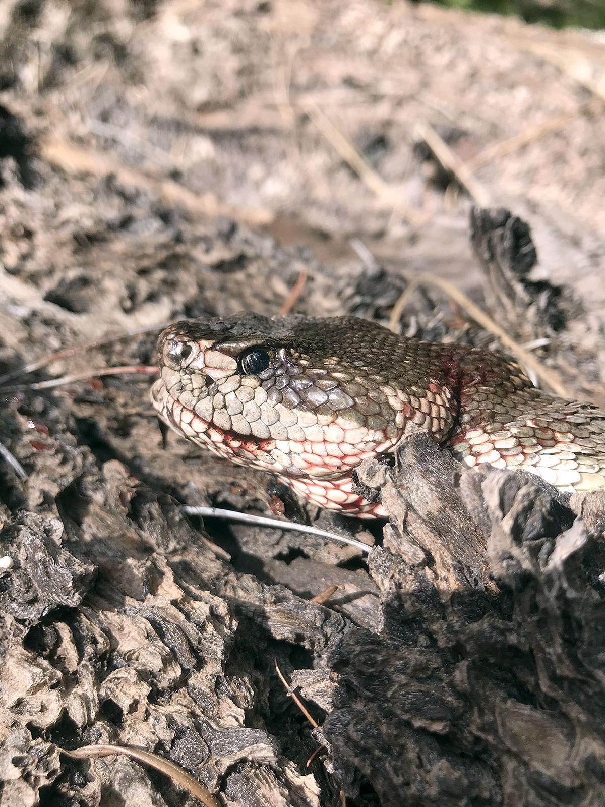10 Snake