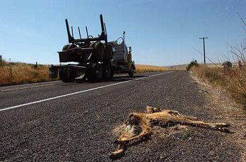 Roadkill with nowhere to go