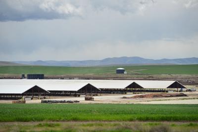 Tillamook subsidiary files lawsuit  against troubled Boardman dairy