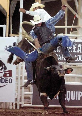 Rodeo chutes swing open