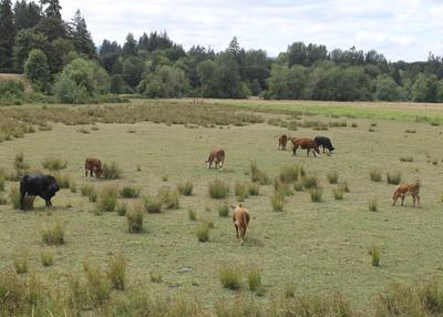 Oregon's 'extreme drought' triples in size