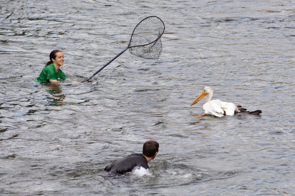 Pelican rescue all part of the job