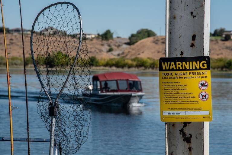 Toxic algae is back. Columbia River is unsafe again, say Tri-Cities officials