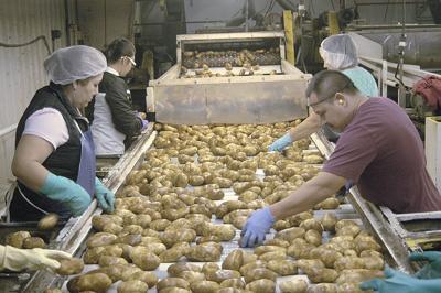 Heat, smoke not expected to diminish potato harvest