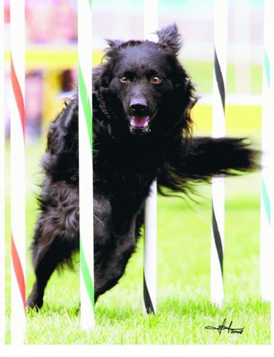 Local woman, dog, head to national agility trials