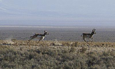 Fish and Wildlife seeks 'historic' hunting expansion