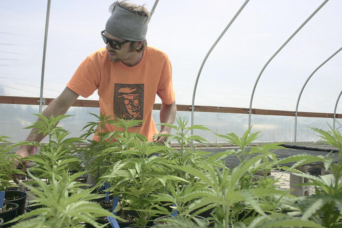 A new hope for hemp   Local News   eastoregonian com