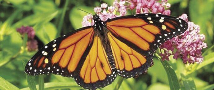 Trumbo - Western Monarchs (2).jpg