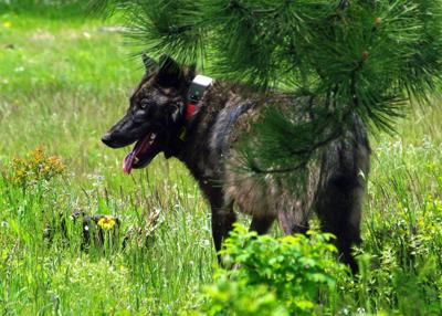 Oregon grants rancher's request to kill wolves