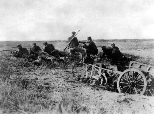 Unsung heroes, animals were vital part of WWI war machine