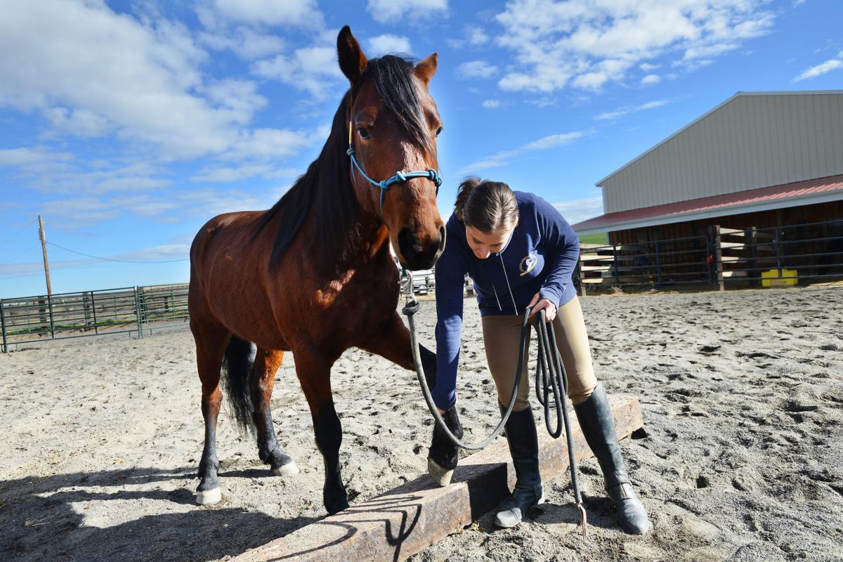 Teenager takes mustang from wild to mild