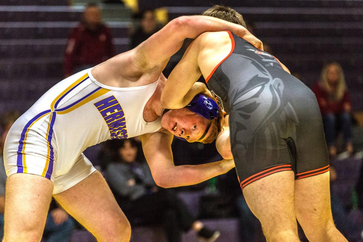 Wrestling | Dawgs sending 7 to regional tournament