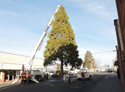 Downtown Hermiston Christmas Tree
