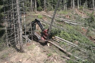 Timber logging