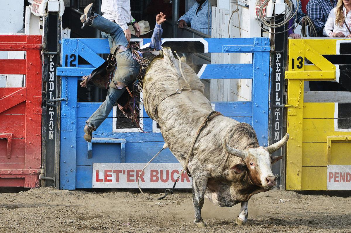 BULL RIDING: Piva returns to Oregon, leaves victorious